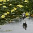 小雨の長居植物園