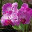 温室の花 (3)