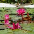 水生植物園2