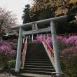 今熊神社のミツバツツジ🌸