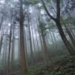 ★霧の中の木立の魅力 2018