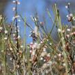 梅の花とイシガケチョウ