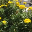 街で出会った花たち🌸
