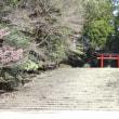 霧島神宮の入り口