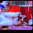 5/27 アリーナと秋田犬 まさる子