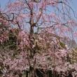 白鷺城お花見ツーリング