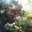 植物観察会in馬渡島