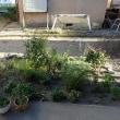 18年08月07・08日 エダマメ収穫