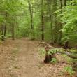 静かな森で