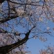 広島も桜いよいよ