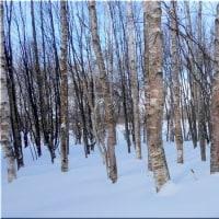 森の積雪は