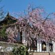 過去の写真~春の花風景その2