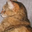 16歳になりました。7月1日はアタシのお誕生日です