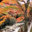 豪渓の紅葉
