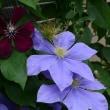 花盛り???2