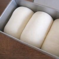 2週間ぶりのパン作り