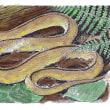 タカチホヘビ。以前のペン画に色付けしてみました。