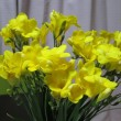 妻の好きな花 フリージア