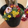 Fさんの花