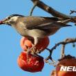 韓国の野鳥と地理