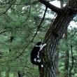 木から下りる