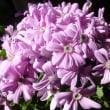 花粉症対策に。体質改善・免疫力Upに役立つアロマ&ハーブ
