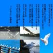 花見川 カモメの飛翔