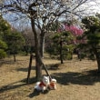 大宮第二公園~梅まつり~