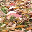 落ち葉がいっぱい