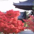 114/24 卍 京都金戒光明寺の紅を求めて・家内と 🚆🚌