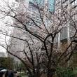 桜とブッチャー