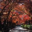 三田洞弘法の紅葉