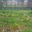 草刈りしましたよ