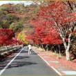丹沢湖へドライブ