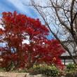 近所の秋色さがし