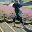 荒川土手の芝桜・・1