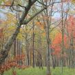 十月、水彩紅葉