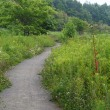 野幌森林公園ふれあいコース経由大沢コースへ