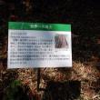 半田山植物園 観察会「四季と自然を楽しむ会」2017.08.27 「311」