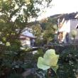 今月の寄植え/柚子ジャムとローストビーフ