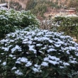 京都の木、色々あります。