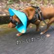 五郎のお山散歩♪