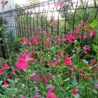 赤い花が咲いたよ