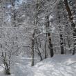 冬の五色沼スノーシューツアー・・・
