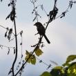 紀ノ川で鳥撮り バズーカ砲試し撮り