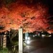 秋も終わりですね