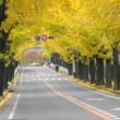 銀杏並木に彩られる街