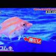 11/18 可愛い魚 これも深海魚 歩いている?!!