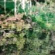 #5507 出流原弁天池湧水