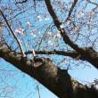 桜🌸便りpuku便り